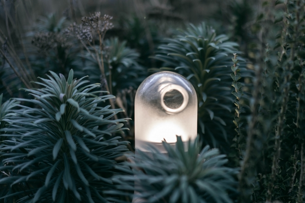 Kodama - esprits de la lumière
